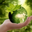 Print in Green: 5 Practical Tips for Eco-Friendly Printing